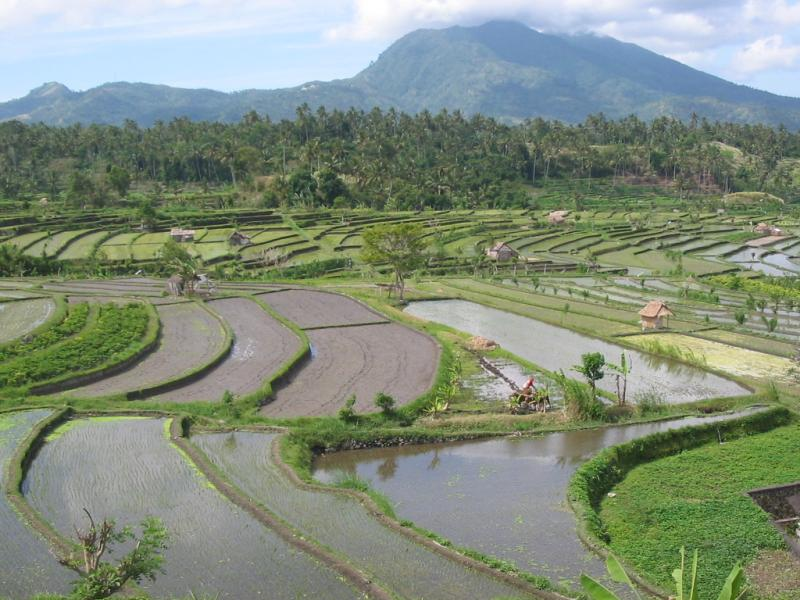 A Common Sight in Bali-Terraced Rice Fields
